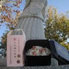 八上姫の桜米