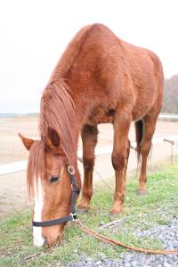 pony-yuki-200x300[1]